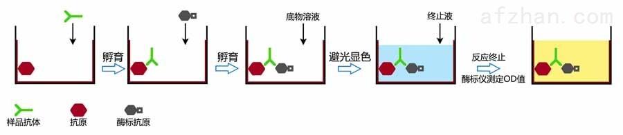 大鼠血小板生长因子 PDGF elisa检测试剂盒