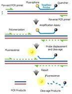 轉基因植物Bar基因核酸檢測試劑盒圖片