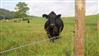 智能牧場電子圍欄,瑞佳安畜牧電圍欄