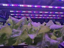 led植物灯多肉蔬菜植物补光灯