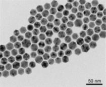 聚多肽纳米颗粒包裹的OVA;脂质体纳米粒子