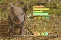蜂窝农业物联网智慧养猪解决方案